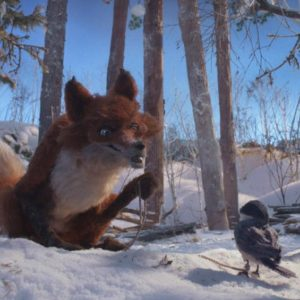 The Fox and the Chickadee