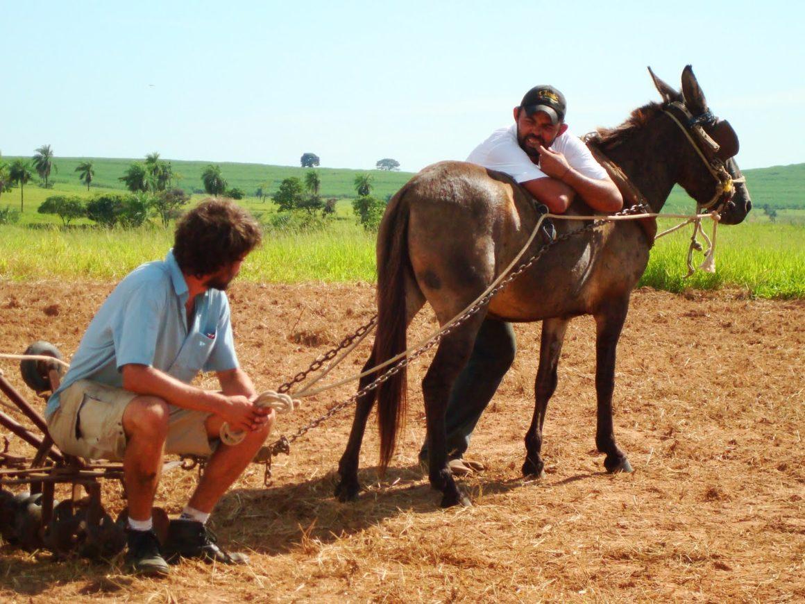 Il mulo testardo e il telecomando