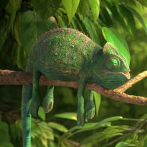 The Common Chameleon