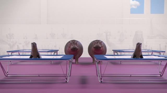 Athleticus: Synchronised Trampoline